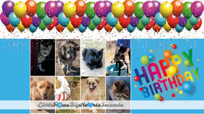 The Road Less Travelled – Little Paws Big Hearts 7-year birthday