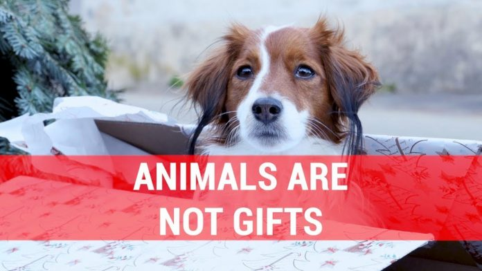 Animals are not gifts