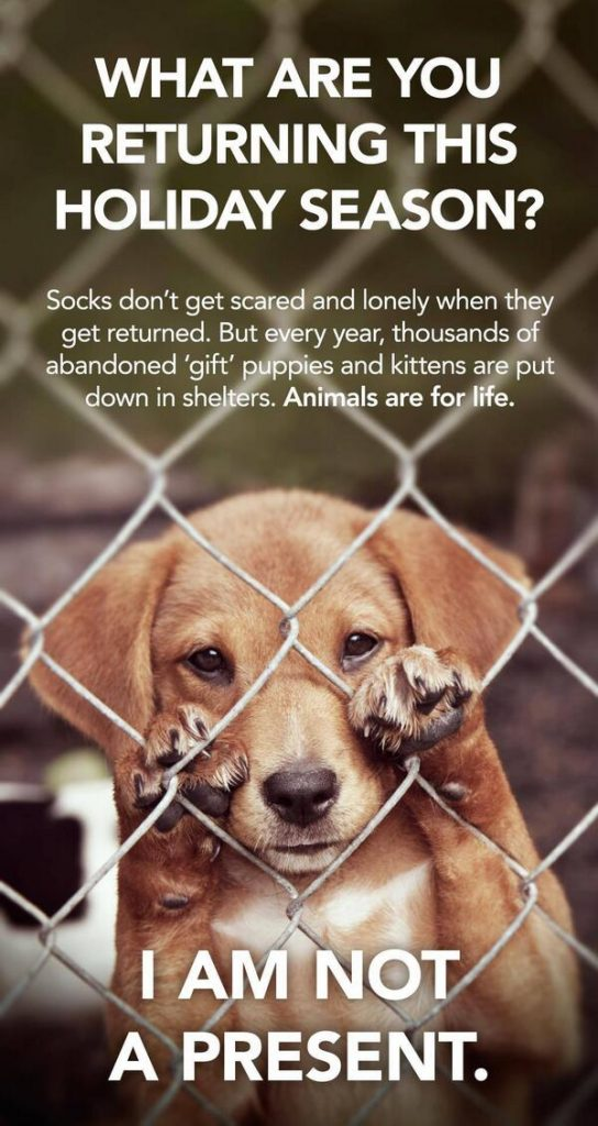 Animals are not gifts!