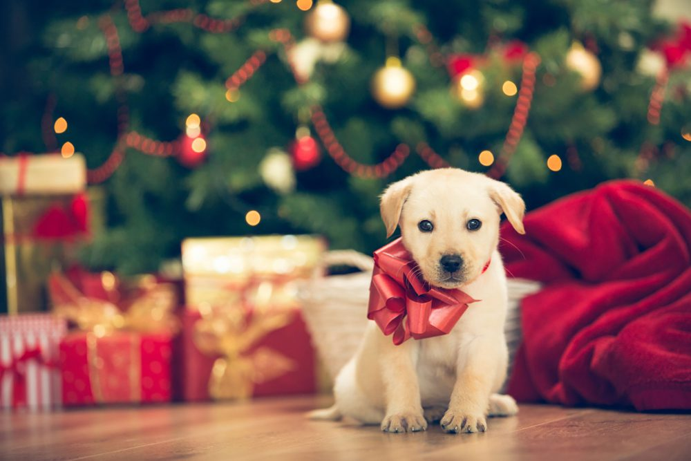 Animals is not gifts