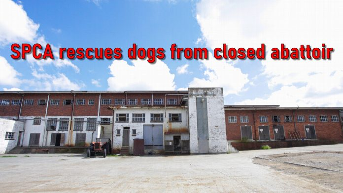 SPCA rescue abandoned dogs at a closed abattoir